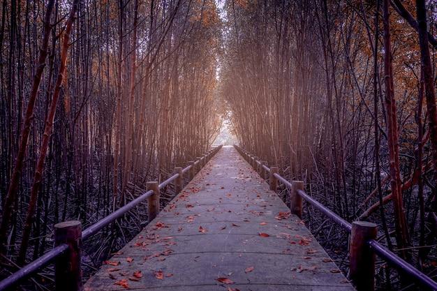 La forêt de mangroves et le pont, le changement de couleur des feuilles