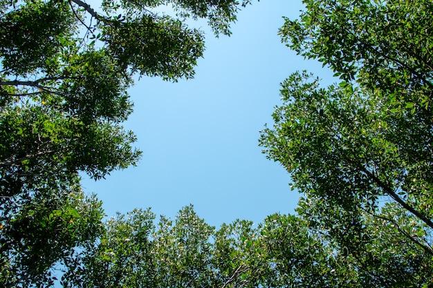 Forêt de mangroves en thaïlande