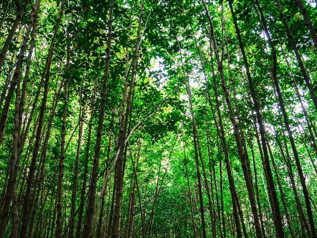 Forêt de mangroves