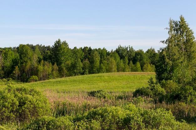 Forêt mixte et arbres poussant sur le terrain vallonné d'herbe verte envahie, paysage d'été