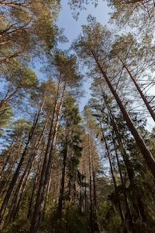 Forêt mixte à l'automne pendant la chute des feuilles, le feuillage change de couleur sur les arbres et commence à tomber