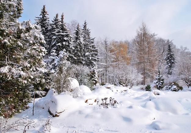 Forêt mixte dans la neige d'hiver