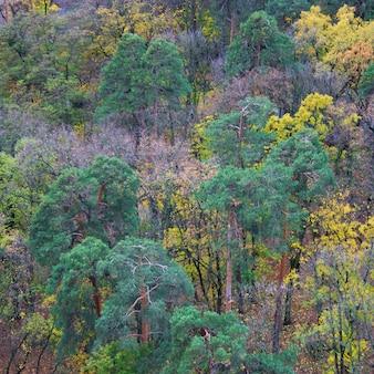 Forêt mixte verte, jaune, orange et rouge aux couleurs vives le jour de l'automne. vue de dessus. kiev, ukraine