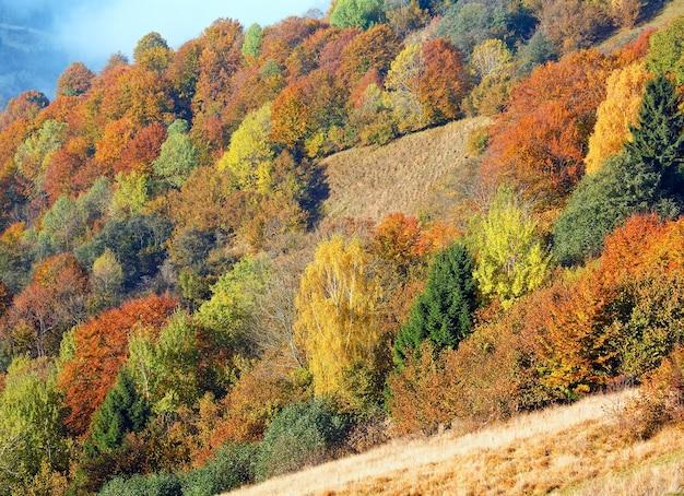 Forêt de montagne d'automne ensoleillée à flanc de montagne (carpates, ukraine)