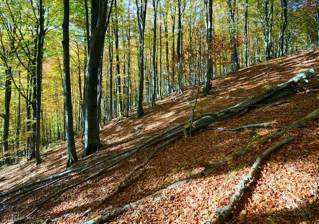 Forêt de montagne d'automne ensoleillée, à flanc de montagne