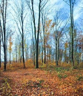 Forêt De Montagne D'automne Avec Feuillage Jaune Mort Sur Le Sol. Photo Premium