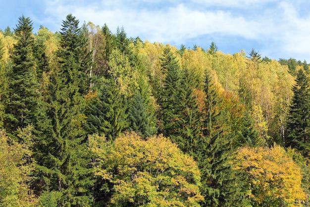 Forêt de montagne d'automne vue sur la colline envahie (ukraine, mont des carpates)
