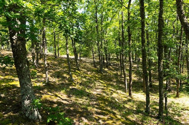 Forêt de montagne. chênes et hêtres sous la lumière du soleil avec ombre.