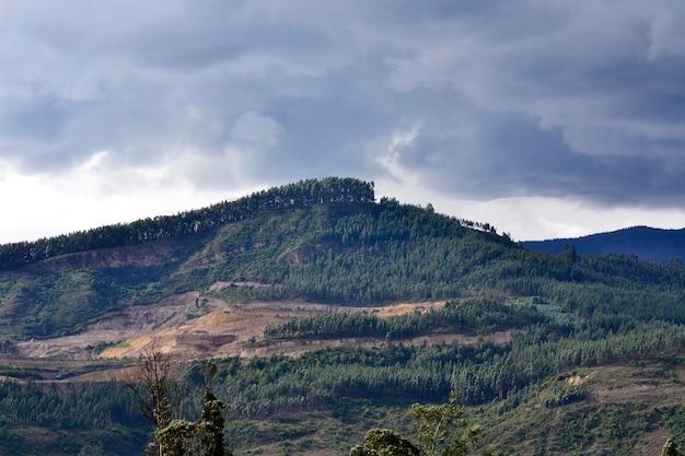 Forêt de montagne dramatique beau ciel