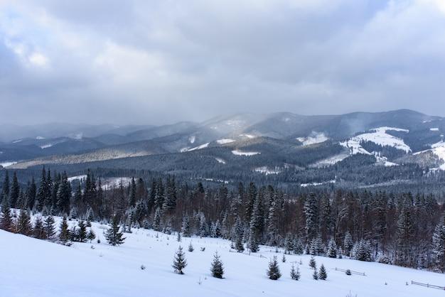 Forêt de montagne d'épinette couverte de neige.