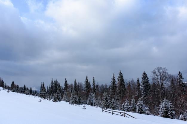 Forêt de montagne d'épinette couverte de neige