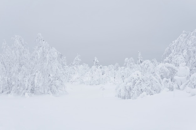Forêt de montagne hivernale gelée blanche, arbres recouverts d'une épaisse couche de givre dans la neige profonde