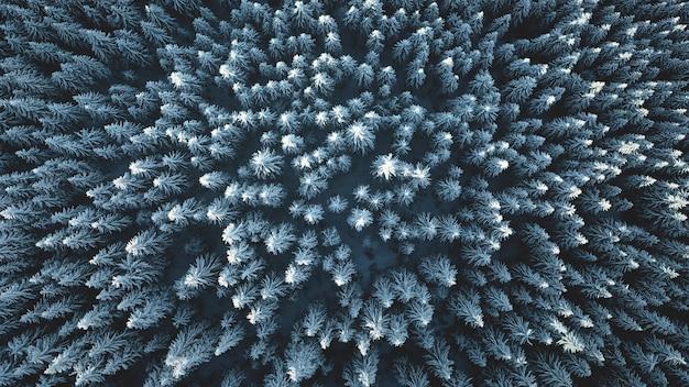 Forêt de montagne de sapin de haut en bas à neige hiver personne nature paysage givre sur les pins