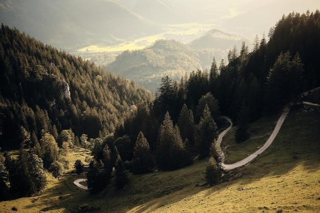 Forêt de montagne sous ciel bleu et nuages blancs