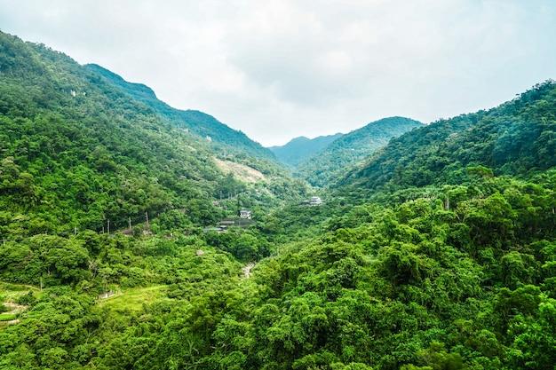 Forêt à la montagne taipei, vue depuis la télécabine de maokong à midi, taiwan.