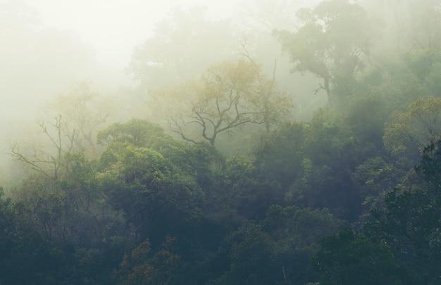 La forêt des montagnes tropicales en thaïlande