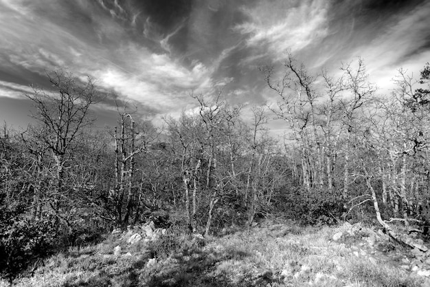 Forêt mourante