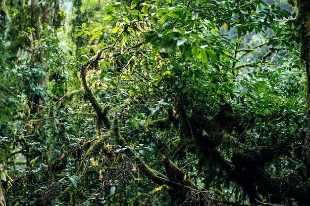 Forêt moussue cameron highlands malaisie branche d'arbre automne branche
