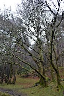 Forêt mystérieuse avec de vieux arbres vieillis et altérés recouverts de mousse