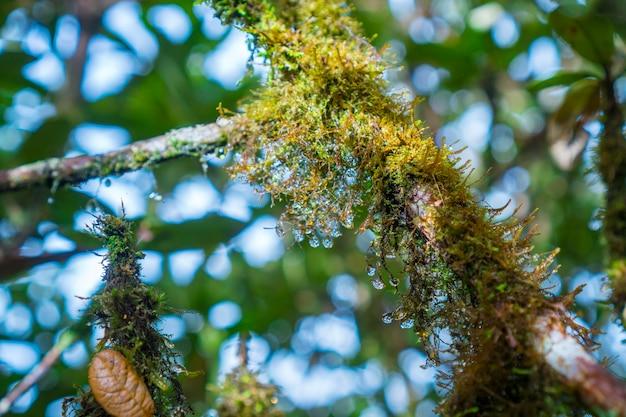 La forêt naturelle des arbres tropicaux, les rayons du soleil à travers le brouillard créent une atmosphère mystique