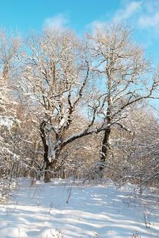Forêt de neige d'hiver avec des arbres dans la neige