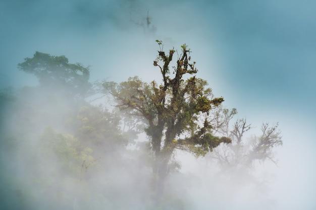 Forêt de nuages de sérénité au costa rica