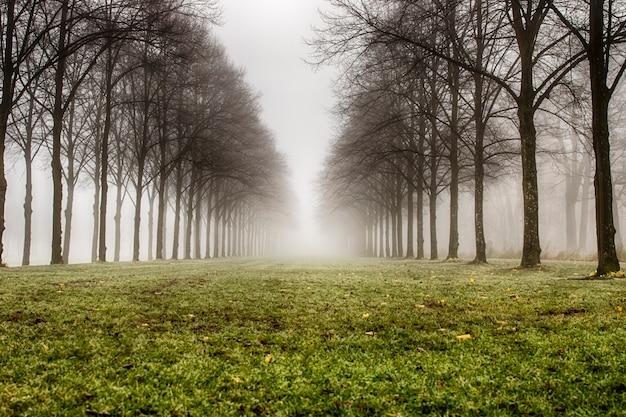 Forêt nuageuse
