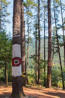 Forêt d'oma, créée par agustin ibarrola, près des criques de santimamiñe, près de gernika, dans la province de biscaye, au pays basque.