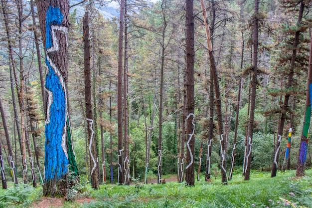 Forêt d'oma dans la réserve de biosphère d'urdaibai.