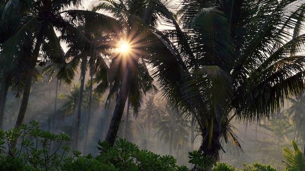 Forêt de palmiers dans la brume matinale dans les rayons du soleil
