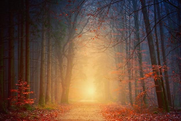 Forêt pendant l'heure d'or