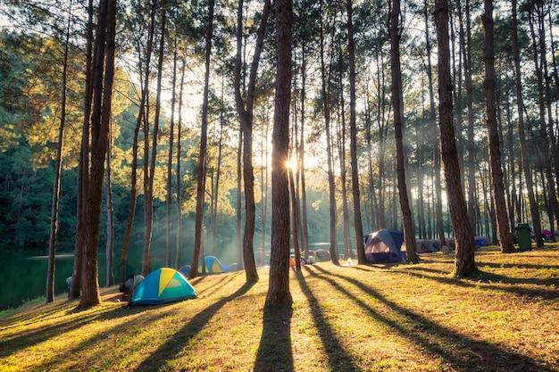 Forêt de pins brille sur le réservoir au coucher du soleil
