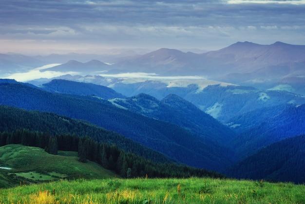 Forêt de pins. carpates. ukraine, europe