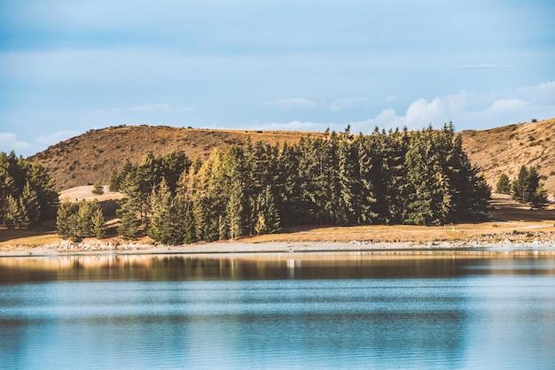 Forêt de pins à côté de la mer
