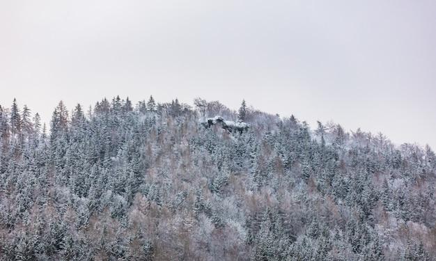 Forêt de pins couverte de neige au sommet d'une colline dans les sudètes, pologne