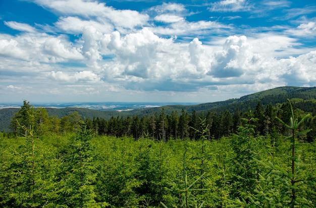 Forêt de pins en été dans les sudètes, pologne