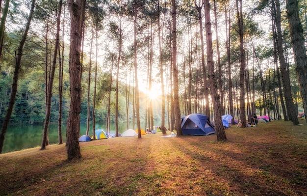 Forêt de pins avec la lumière du soleil brille sur le réservoir au coucher du soleil
