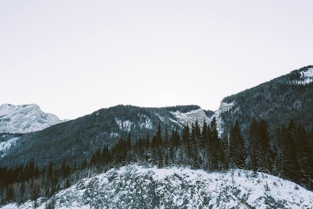 Forêt de pins sur les montagnes
