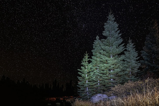 Forêt de pins la nuit