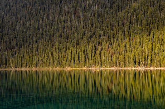 Forêt de pins reflétant le calme du lac louise dans le parc national banff, alberta, canada