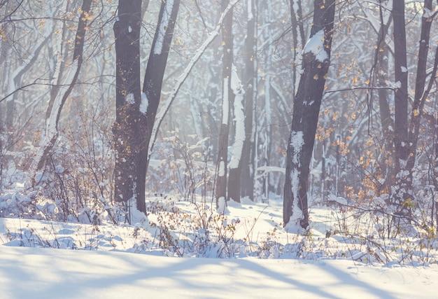 Forêt pittoresque couverte de neige en hiver.
