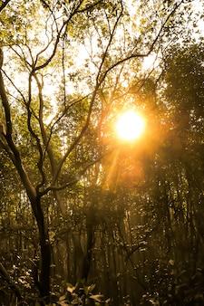 Forêt pittoresque de feuillus verts à feuilles caduques entourés de feuilles, avec le soleil projetant ses rayons chauds. coucher de soleil en été