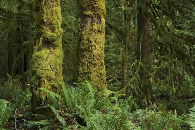 Forêt pluviale de l'état de washington