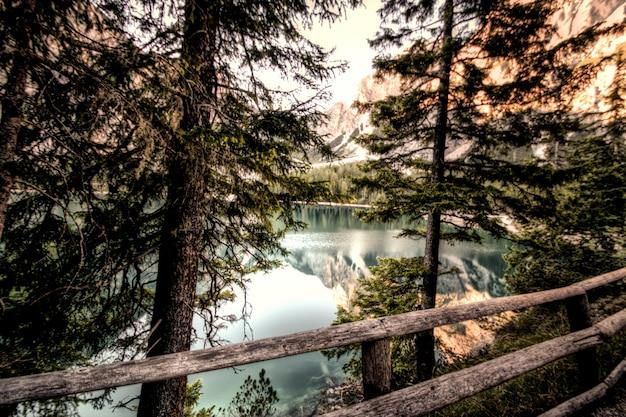 Forêt près d'un plan d'eau