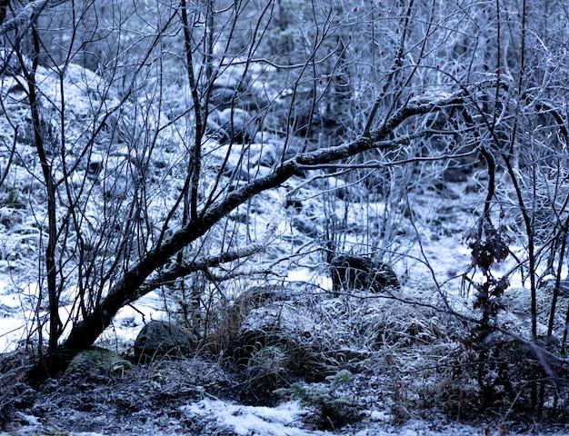 Forêt profonde couverte de glace