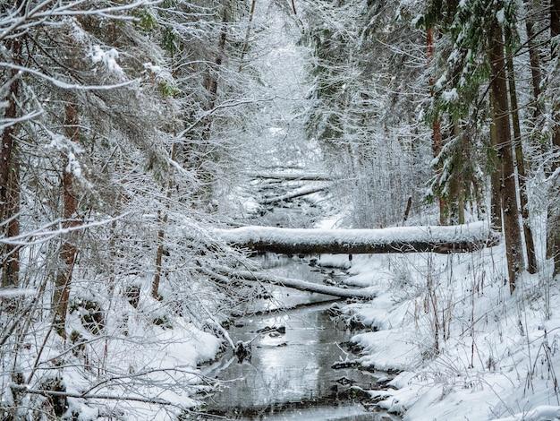 Forêt profonde d'hiver avec une rivière étroite