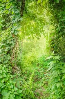 Forêt profonde verte fantastique