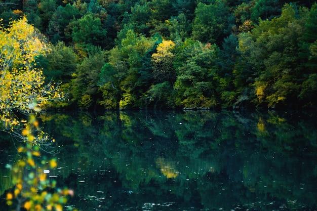Forêt reflétée dans l'eau