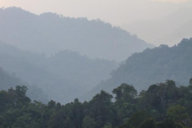 Forêt de rêve sombre avec brouillard