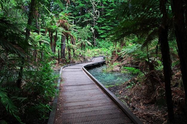 Forêt rouge à rotorua, nouvelle zélande